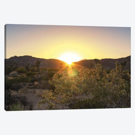 Desert Sunset Canvas Print #AFK44} by Alison Frank Canvas Art Print