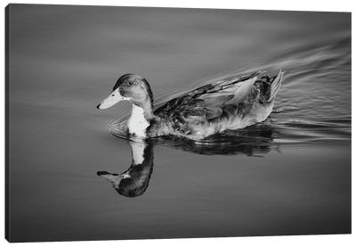 Duck In Black And White Canvas Art Print