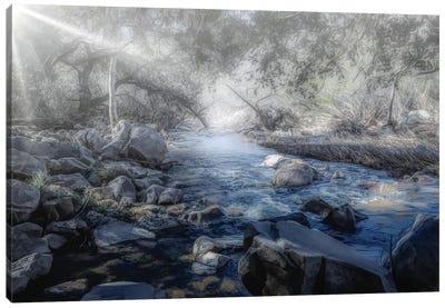 Foggy Creek Canvas Art Print