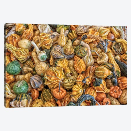 Gourd Hoard Canvas Print #AFK52} by Alison Frank Canvas Print