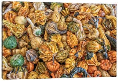 Gourd Hoard Canvas Art Print