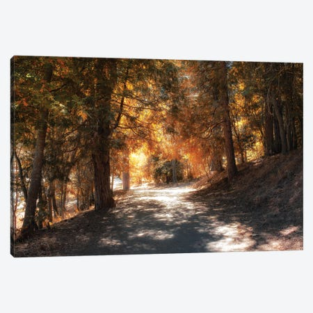 Into The Autumn Woods Canvas Print #AFK58} by Alison Frank Canvas Print