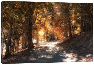 Into The Autumn Woods Canvas Art Print