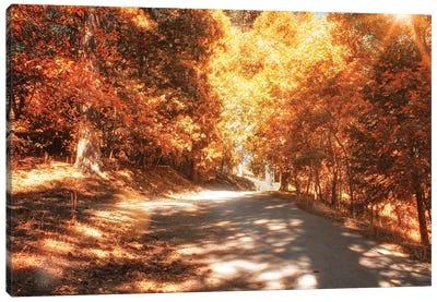 Autumn Forest Canvas Art Print