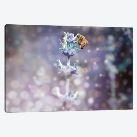Bee On Top Canvas Print #AFK72} by Alison Frank Canvas Art Print
