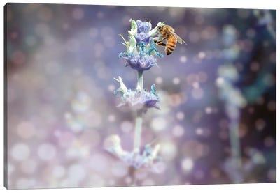 Bee On Top Canvas Art Print