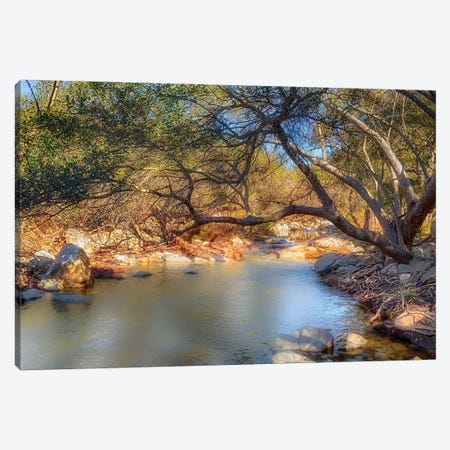 Branch Out Canvas Print #AFK75} by Alison Frank Canvas Wall Art