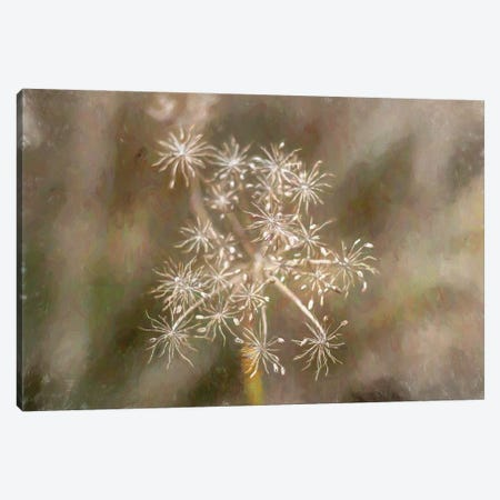 Seeds And Stems Canvas Print #AFK97} by Alison Frank Canvas Artwork