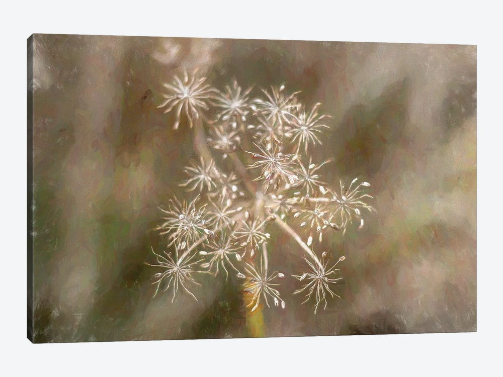 Seeds And Stems by Alison Frank 1-piece Canvas Print