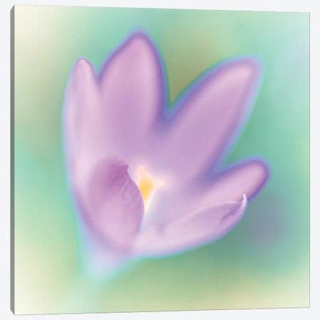 Crocus Flower Macro Canvas Print #AFR101} by Assaf Frank Art Print