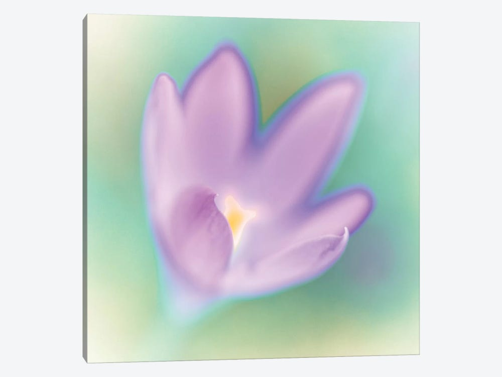 Crocus Flower Macro by Assaf Frank 1-piece Canvas Wall Art