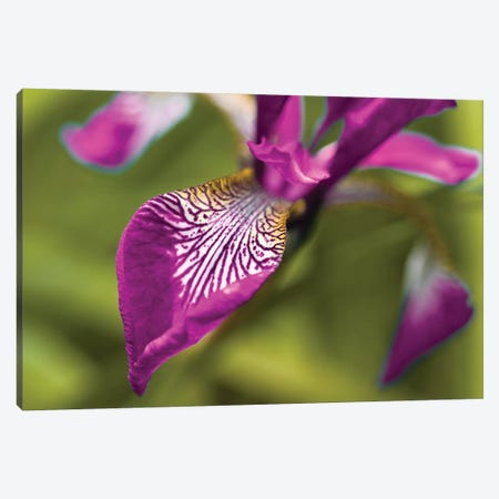 Iris Canvas Print #AFR105} by Assaf Frank Canvas Art