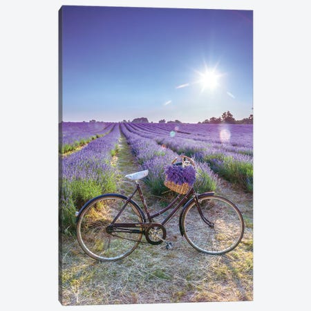 Lavender Canvas Print #AFR107} by Amanda J. Brooks Canvas Art