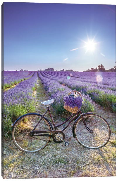 Lavender Canvas Art Print