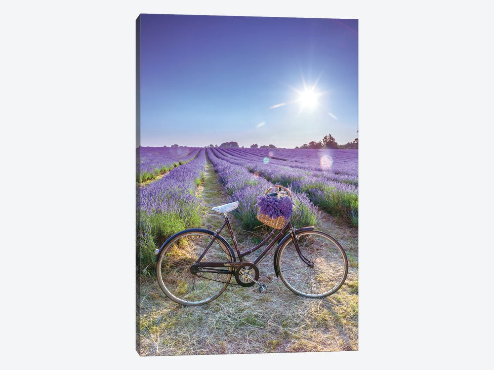Lavender 1-piece Canvas Wall Art