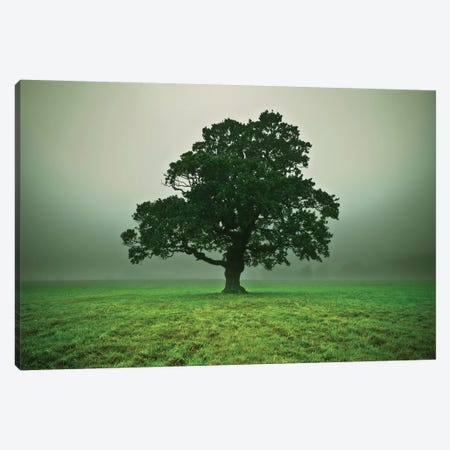 Misty Trees Canvas Print #AFR108} by Assaf Frank Canvas Print
