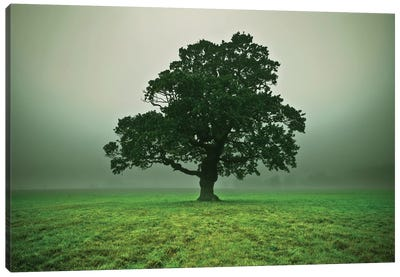Misty Trees Canvas Art Print