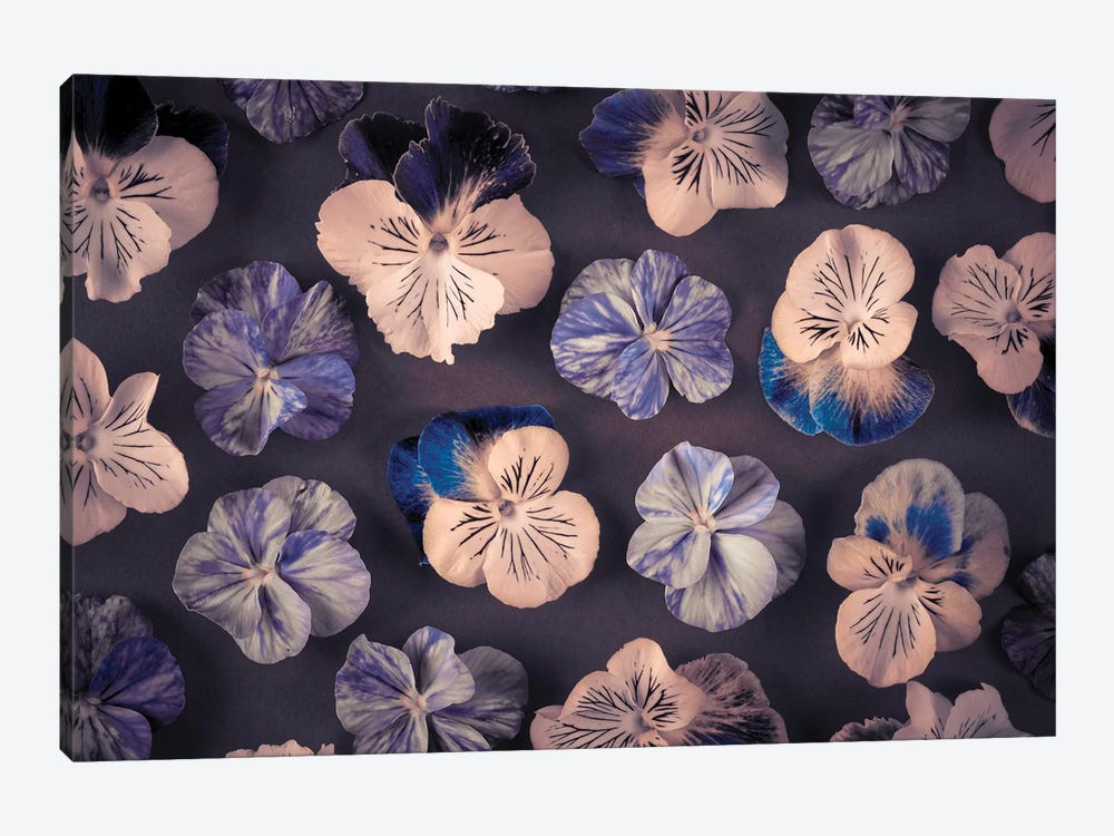 Pansies by Assaf Frank 1-piece Canvas Print