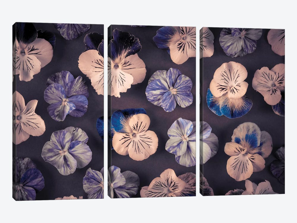 Pansies by Assaf Frank 3-piece Art Print