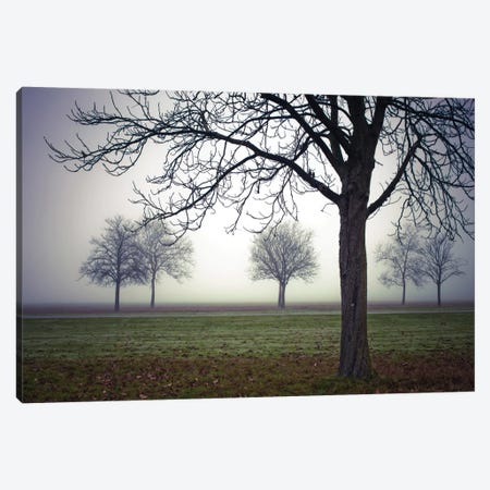 Early Evening Mist Canvas Print #AFR13} by Assaf Frank Canvas Art