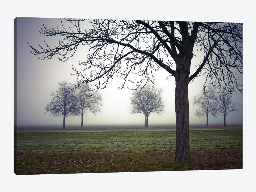 Early Evening Mist by Assaf Frank 1-piece Canvas Art