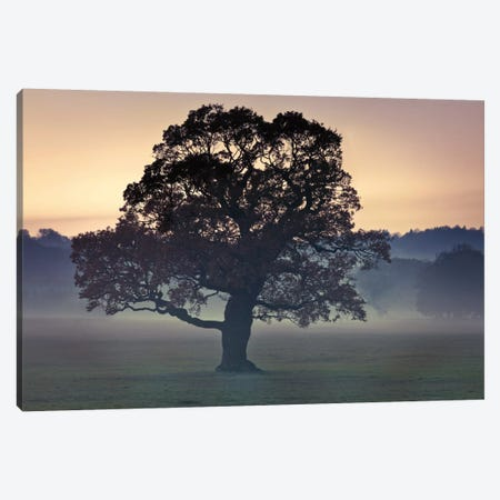Evening Wisdom Canvas Print #AFR15} by Assaf Frank Art Print