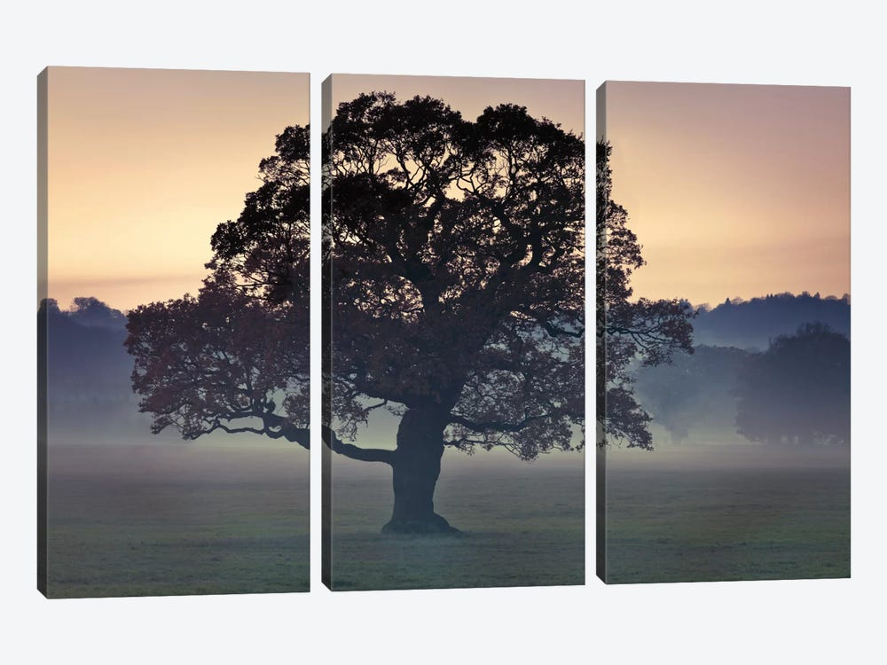 Evening Wisdom by Assaf Frank 3-piece Canvas Wall Art