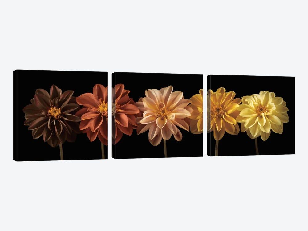 Floral Salute by Assaf Frank 3-piece Canvas Print