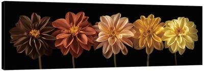 Floral Salute Canvas Art Print