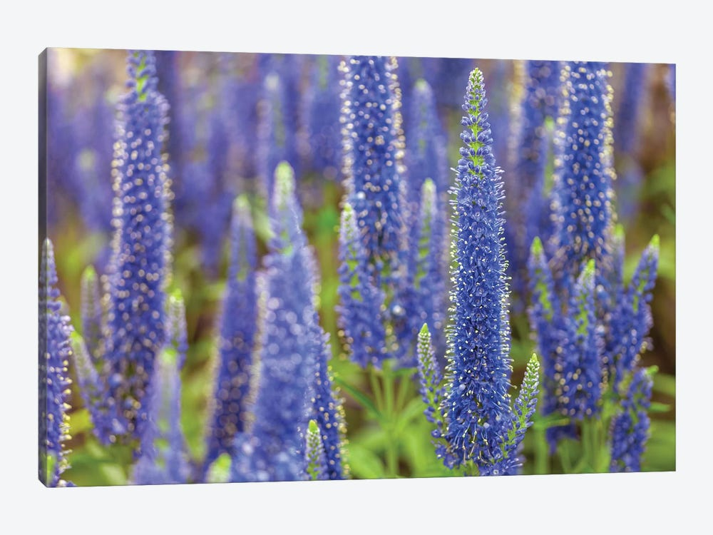 Veronica by Assaf Frank 1-piece Canvas Print