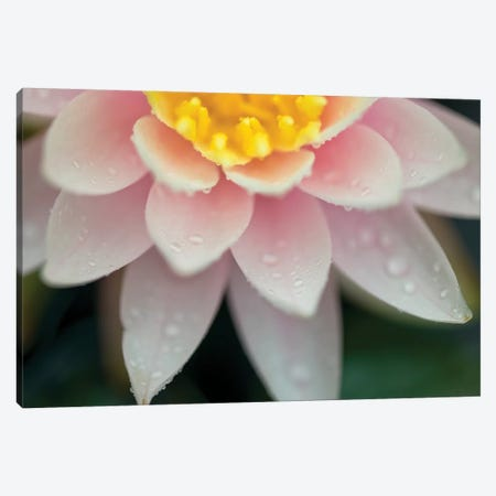 Water Lilies Canvas Print #AFR187} by Assaf Frank Canvas Art