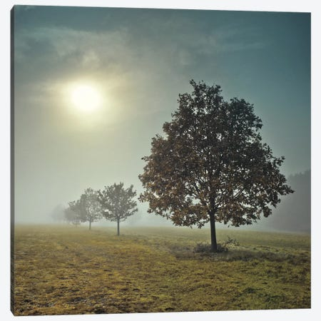 It's A New Day Canvas Print #AFR25} by Assaf Frank Canvas Art