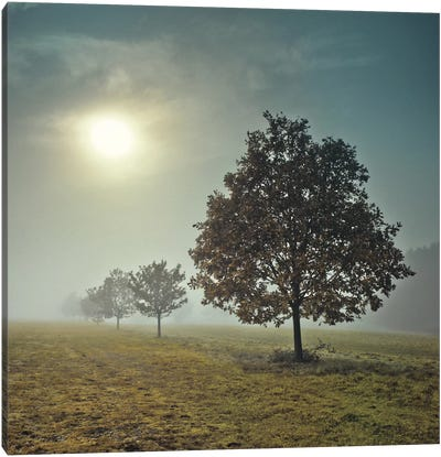 It's A New Day Canvas Print #AFR25