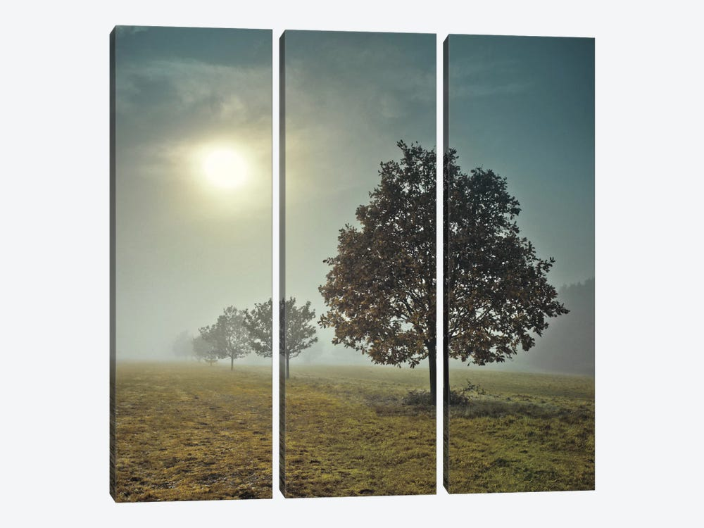 It's A New Day by Assaf Frank 3-piece Art Print