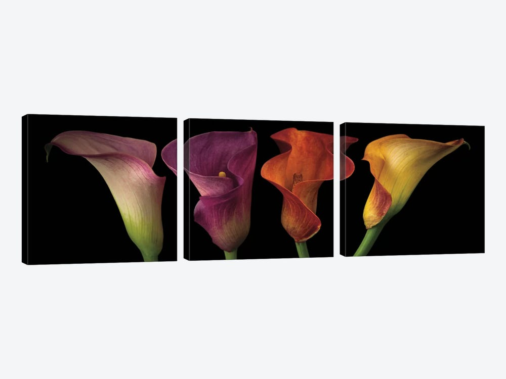 Jewel Calla Lilies by Assaf Frank 3-piece Canvas Wall Art