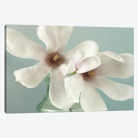Magnolias Canvas Print #AFR30} by Assaf Frank Canvas Wall Art