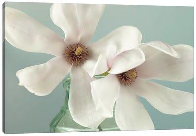 Magnolias Canvas Print #AFR30