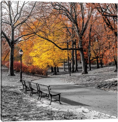 Park Pretty I Canvas Art Print