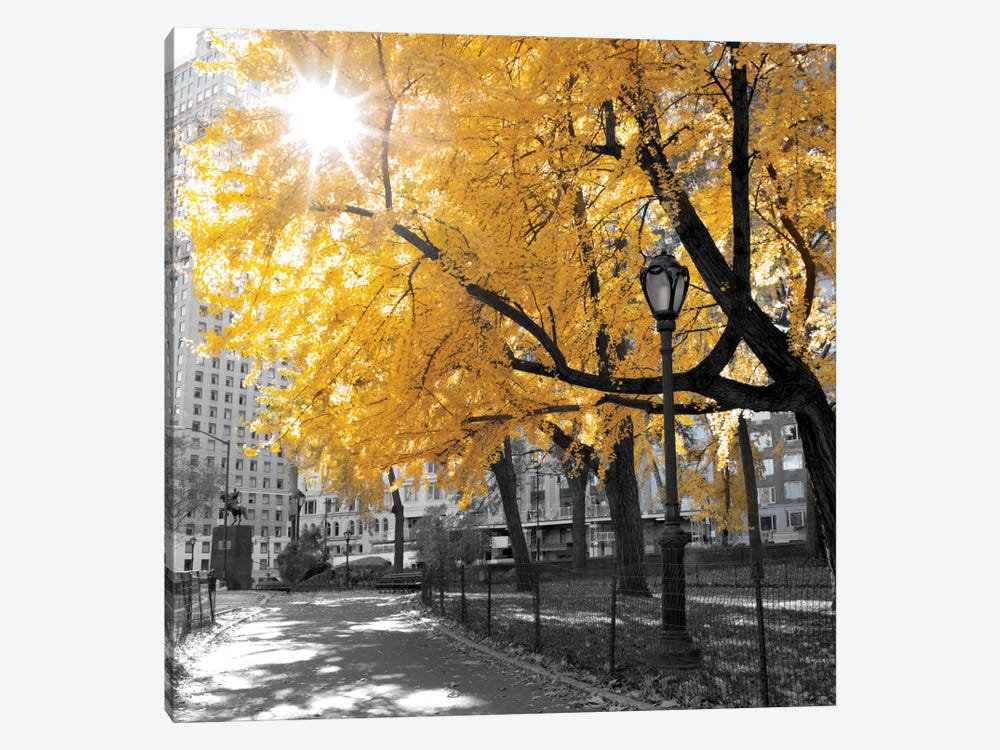 Park Pretty II by Assaf Frank 1-piece Canvas Art Print
