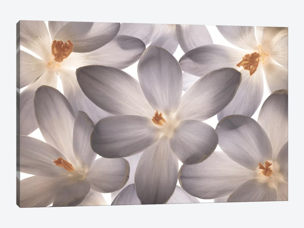 Petal Perfect by Assaf Frank 1-piece Canvas Art