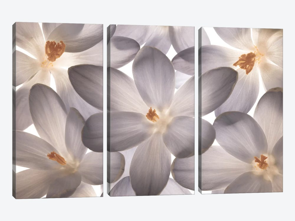 Petal Perfect by Assaf Frank 3-piece Canvas Art