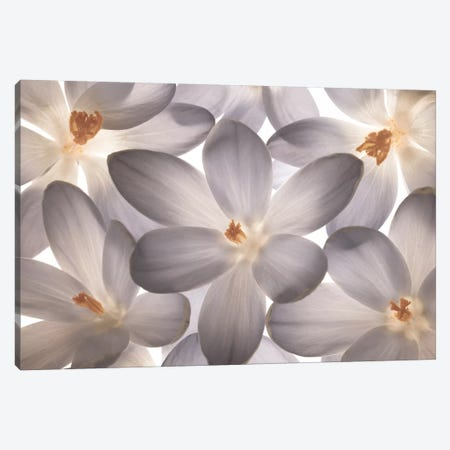 Petal Perfect 3-Piece Canvas #AFR40} by Assaf Frank Art Print