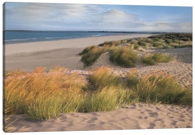 Sandy Shores Canvas Art Print