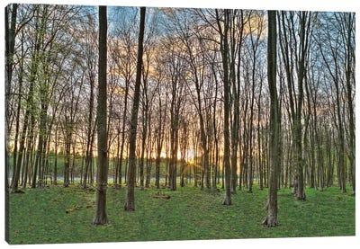 Secret Sunset Canvas Print #AFR49