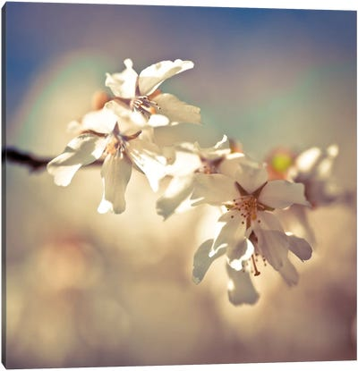Soft Bloom I Canvas Art Print