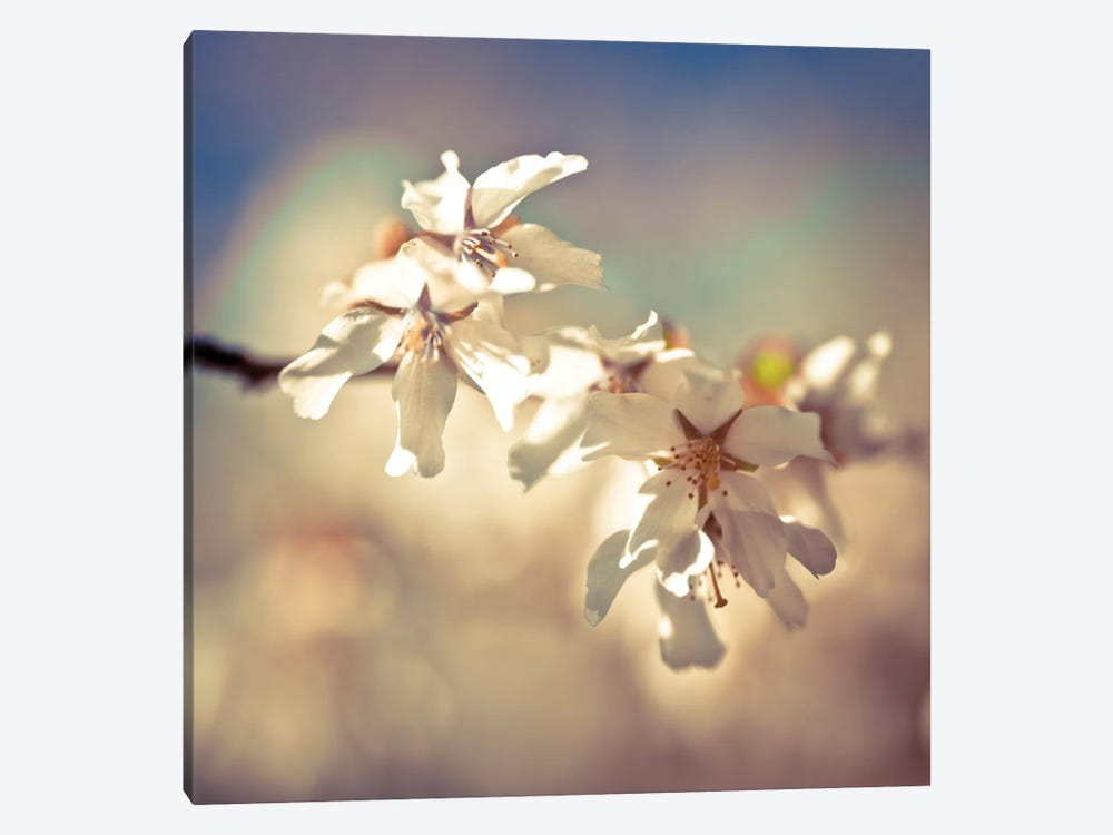 Soft Bloom I by Assaf Frank 1-piece Canvas Wall Art