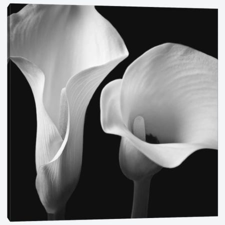 Softness II 3-Piece Canvas #AFR54} by Assaf Frank Art Print