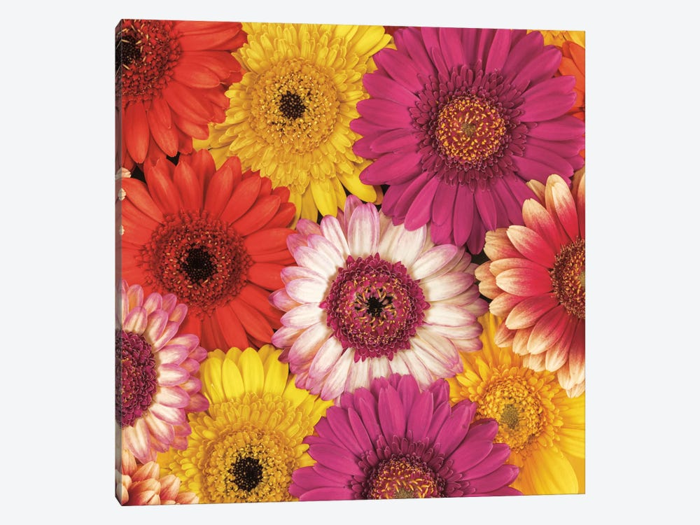 Splash Of Color I 1-piece Canvas Wall Art