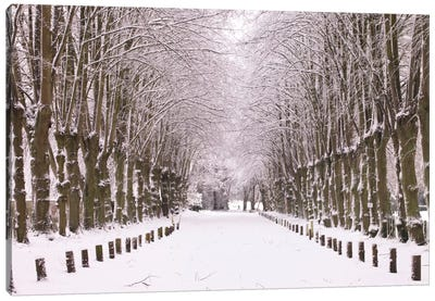 Winter's Aisle Canvas Art Print