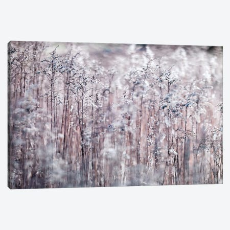 Cotton Tops Canvas Print #AFR71} by Assaf Frank Canvas Artwork